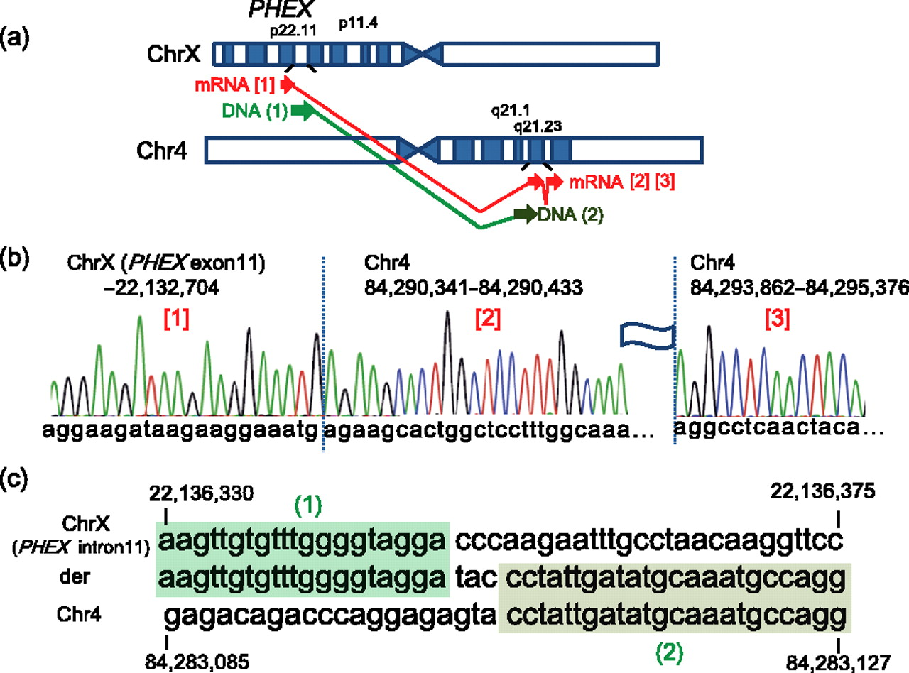 Mutational analysis of patients with FGF23-related