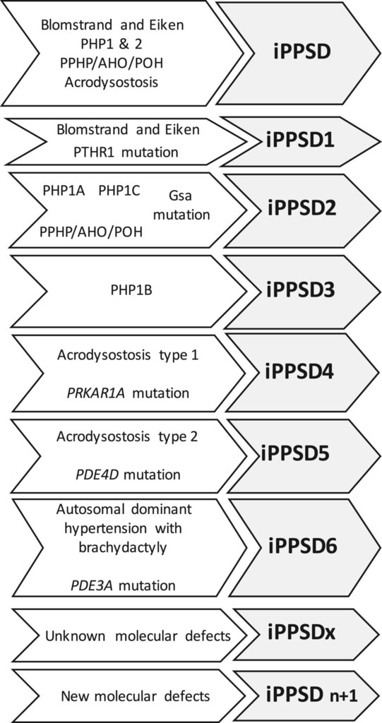 From pseudohypoparathyroidism to inactivating PTH/PTHrP signalling