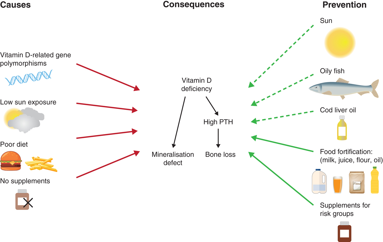 Current Vitamin D Status In European And Middle East Countries And Strategies To Prevent Vitamin D Deficiency A Position Statement Of The European Calcified Tissue Society In European Journal Of Endocrinology Volume