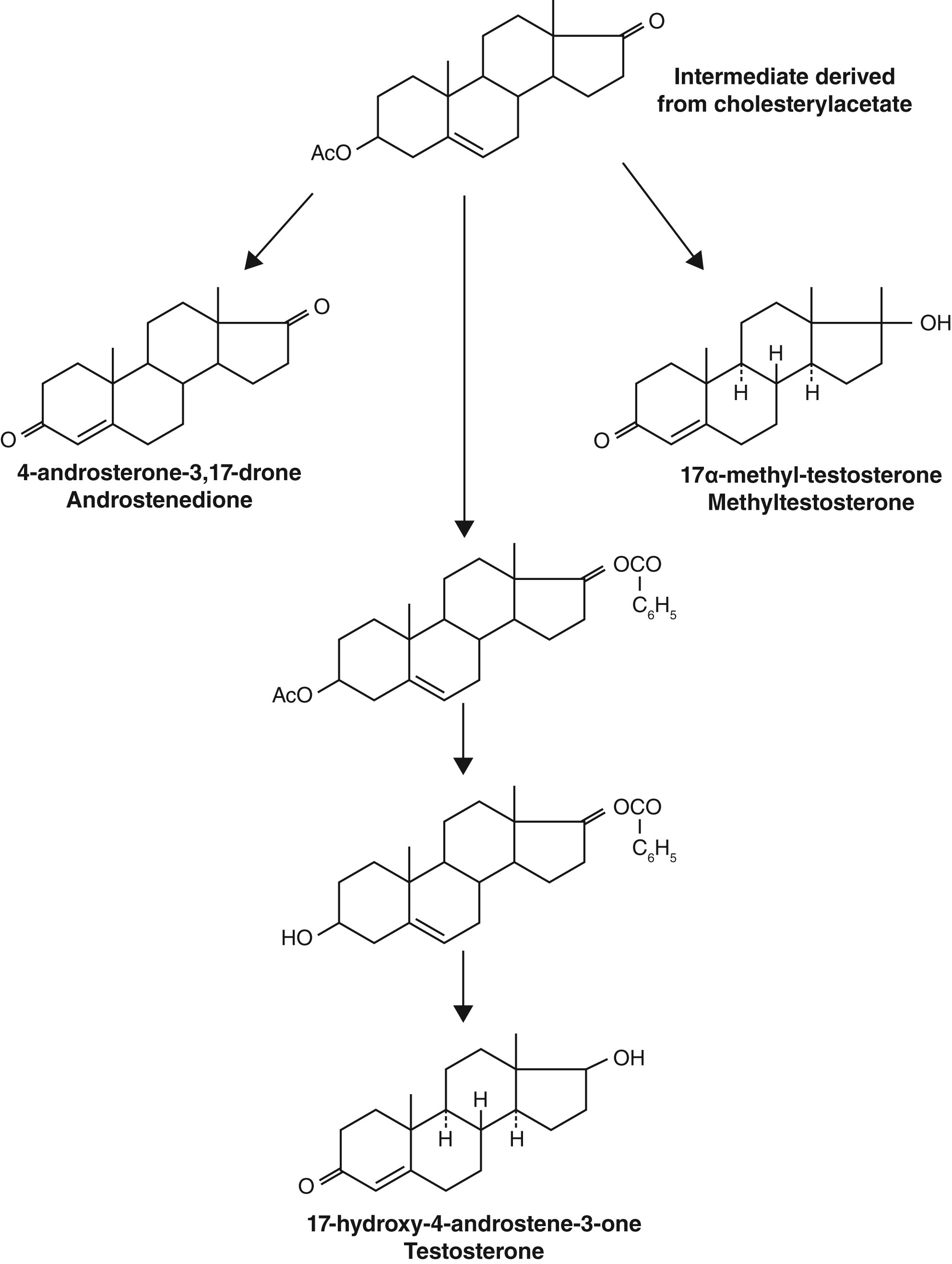 Endocrine History The History Of Discovery Synthesis And Development Of Testosterone For Clinical Use In European Journal Of Endocrinology Volume 180 Issue 6 2019